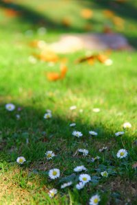 Zadbany trawnik