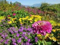 Łąka pełna kwiatów